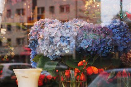 街の中のお花