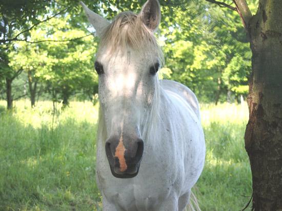 ユニコーンのような白馬