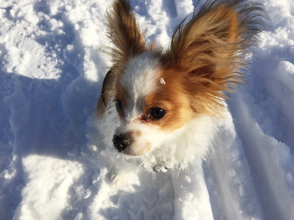 エンジェルと雪