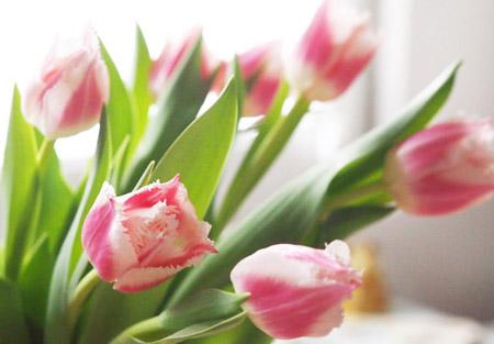 Jeannine の花